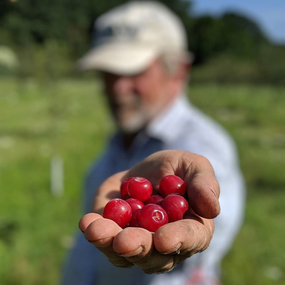 Alan Kobernick holding cherries